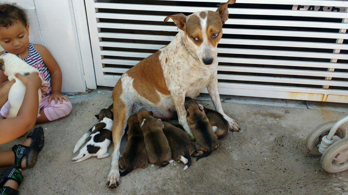 Casa pega fogo e bombeiros salvam casal de cães e oito filhotes no Interior de SP #G1