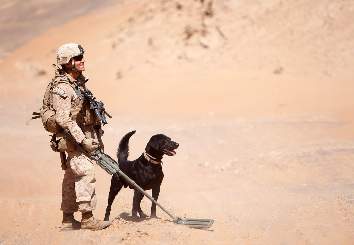 RT @USMC: #ifitwerentfordogs Life would be ruff. https://t.co/294m8OX6LE
