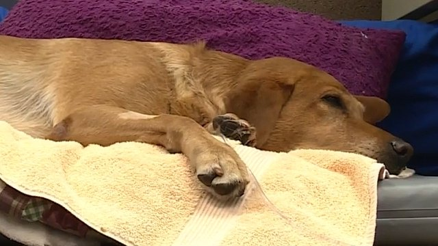 Dog hit by car receives help from community