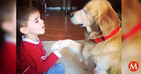 ▶️ Falleció Smiley, el perro terapeuta que era ciego; ayudaba a niños con  discapacidad https://t.co/XvKYjvlDsS https://t.co/0uZU82l3Df