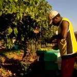 Australia urged to stamp out farm workers trapped in 'modern slavery'