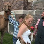Happy Hump Day! Wedding guests include a camel