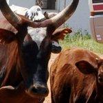 President warns balalo pastoralists in Acholi