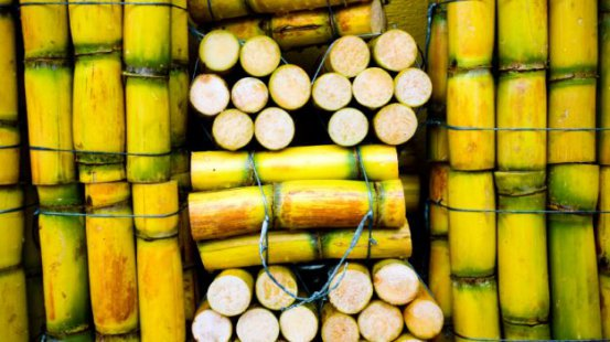 Three arrested over sugar cane poaching