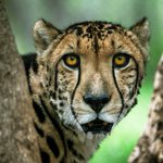 Fighting Extinction: Researching and Designing Solutions to Protect Endangered Species