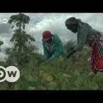 Drought and corruption fuel corn crisis in Kenya | DW English