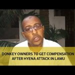 Donkey owners to get compensation after hyena attack in Lamu