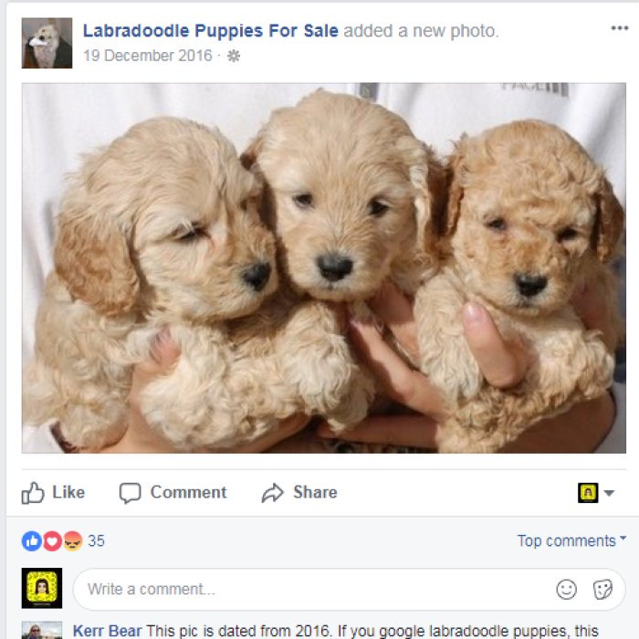 Online puppy scams: how I nearly fell for it