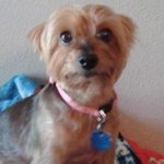 Texas woman suffers from 'broken heart syndrome' after her dog dies