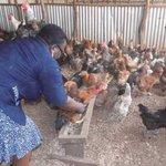 Teacher delves into thriving poultry farming