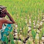 BJP blames Punjab govt, says farmers still dying