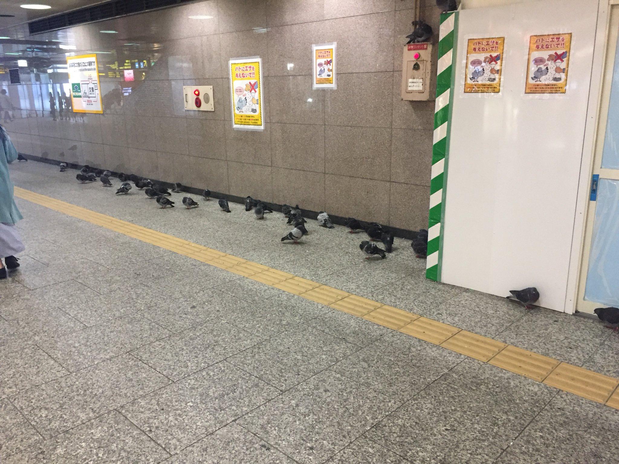 鳩が新宿駅構内に避難するレベルやぞ https://t.co/F1BZG7fmlM