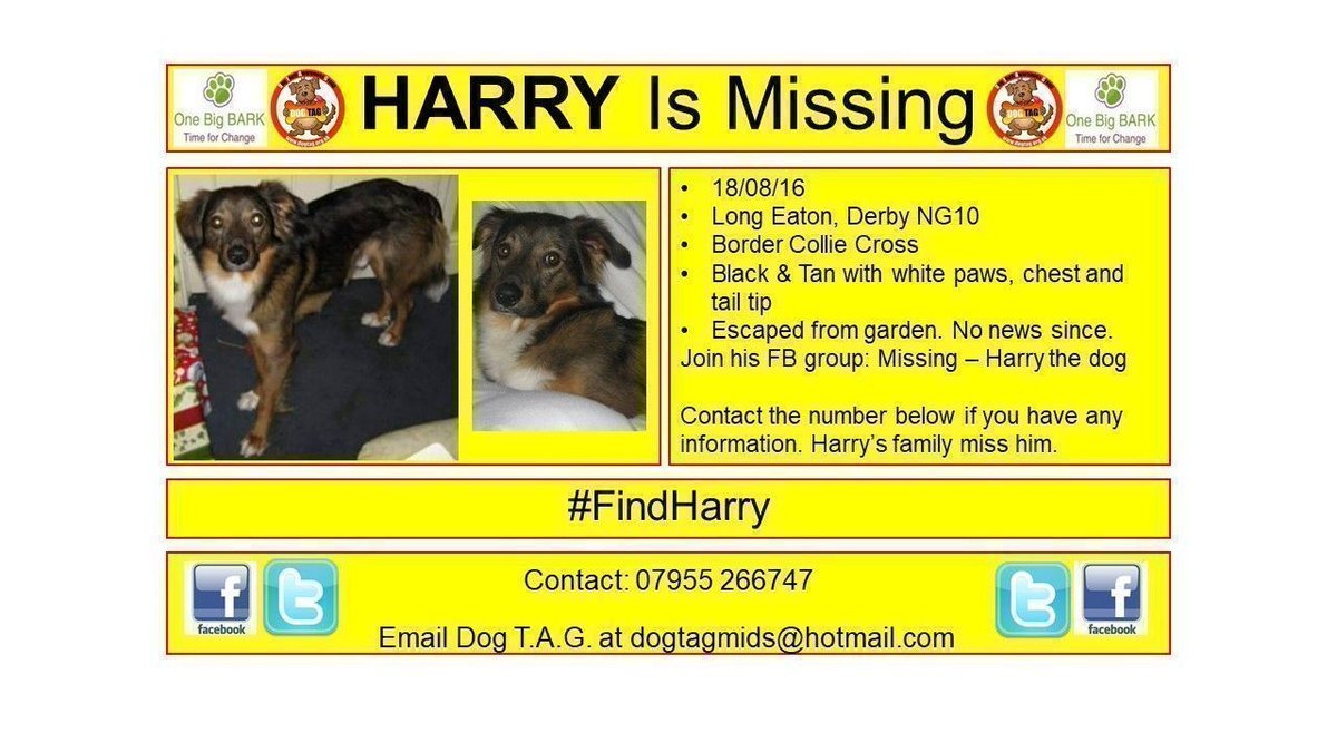 RT @DogTAGMids: #FindHarry  #lostdogalert Much Loved, Much Missed #scanme https://t.co/dWRsxYaTYf
