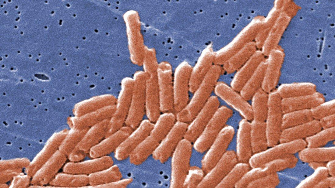 Jambalaya suspected cause of Louisiana salmonella outbreak