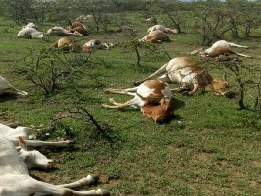 Laikipia cows were caught in crossfire, commander defends cops