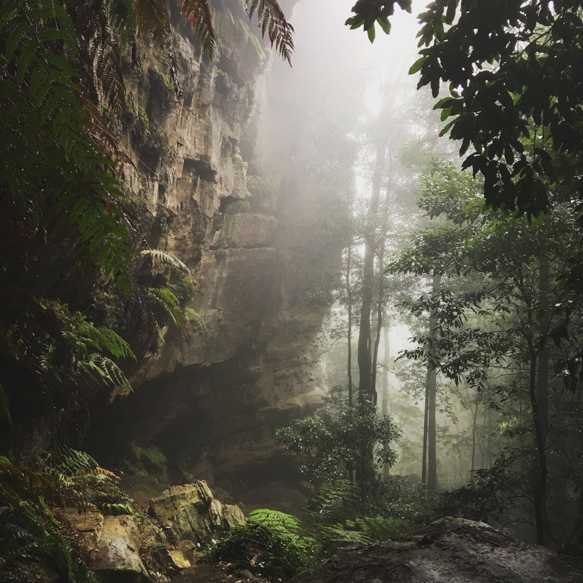 Within the Blue Mountains of Australia.. https://t.co/wiy5W67cbA https://t.co/c6CK17yelo