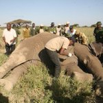 Jumbo poaching in Africa declines, ivory seizures rise – reports