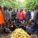 Cocoa Farmers Dump Minority