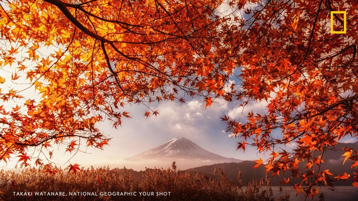 Top Shot: Autumn Framing https://t.co/gwXZgzT9E0 #YourShot https://t.co/XsG0ecqMu0