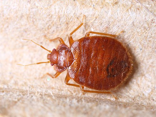 test Twitter Media - Top Ten Tips to Prevent or Control Bed Bugs https://t.co/L9GZhKcFGp https://t.co/PcOpWeqedT