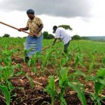 Official counsels farmers to utilise current rains