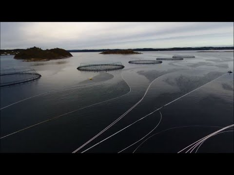A salmon aquaculture farm in Norway