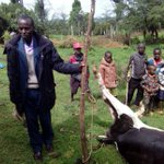 Kalenjin elders to perform rituals to end brutal killing of cows