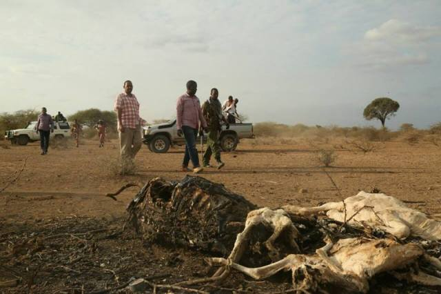 Drought is our worry, not elections—Wajir East MP