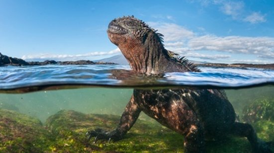 Could Genetic Engineering Save the Galápagos?