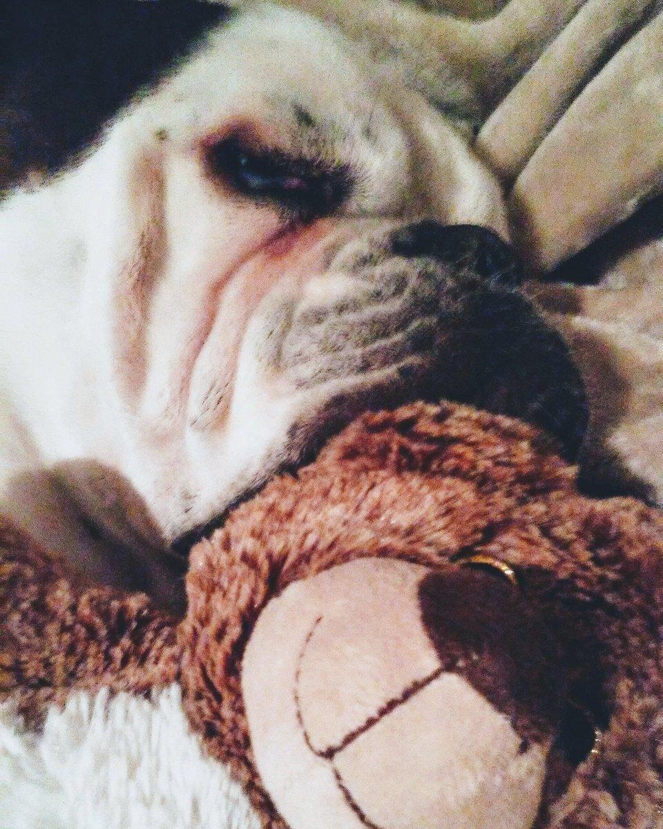 He wants all da cuddles. 💗💋 #Rockywilson wSup1ycFQ8