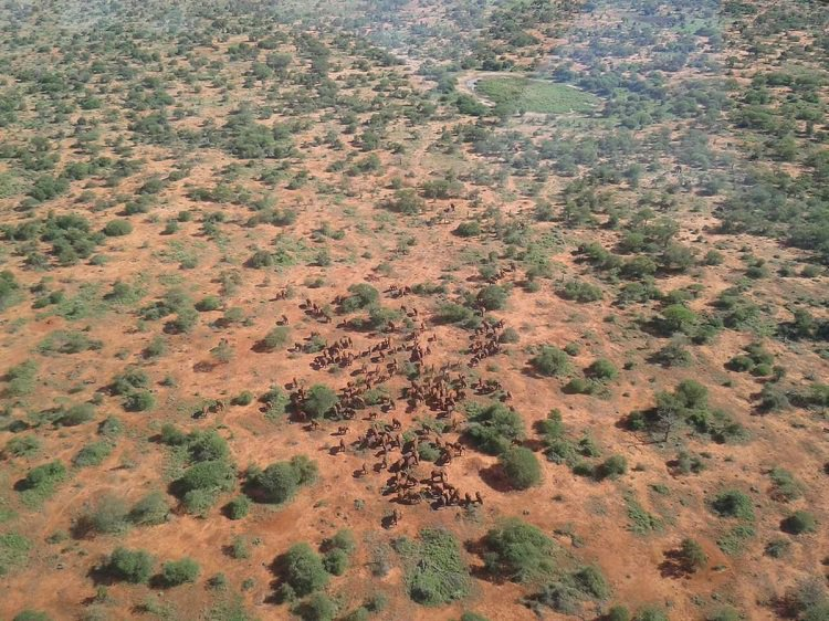 KWS conducts Great Northern Kenya wildlife aerial count