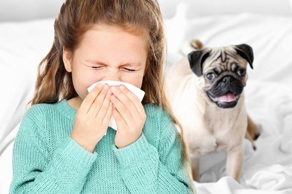 Dog Allergy: Causes, Symptoms, Treatment and Prevention https://t.co/2gxCW3lleW https://t.co/xSlWEHJ93a