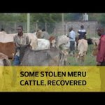 Some stolen Meru cattle, recovered