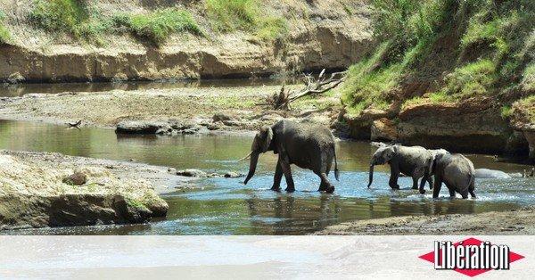 RT @libe: Les Etats-Unis réautorisent l'importation de trophées d'éléphants https://t.co/zphzsBHEAx https://t.co/YrxzLCu5AF