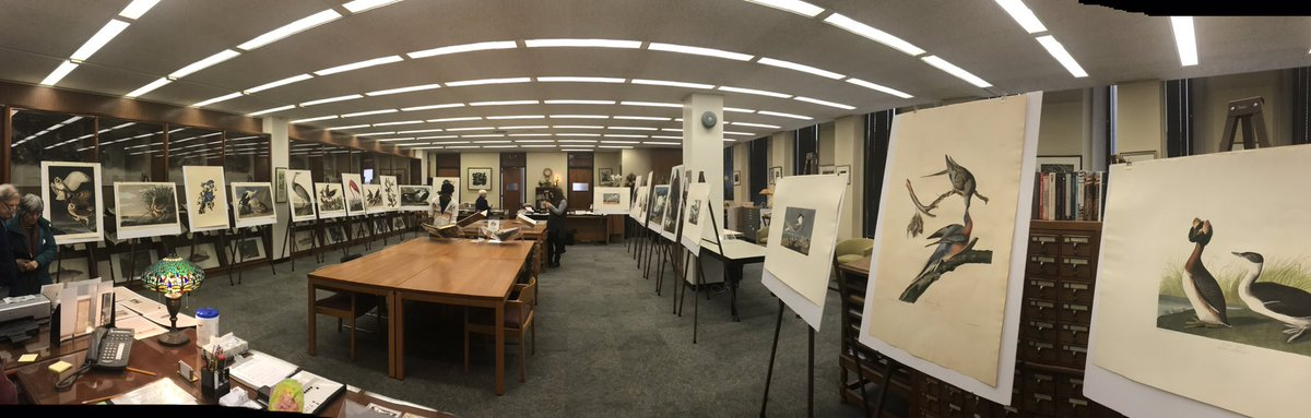 RT @PittLibraries: Be sure to check out the Audubon prints in our Special Collections Reading Room today #audubonday2017 https://t.co/TxfmO…