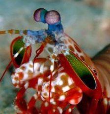 <回廊蝦蛄日和> https://t.co/XKbstHJbu9 海底甲殻類エビシャコが読んだ本の紹介や感想などを書いています。...