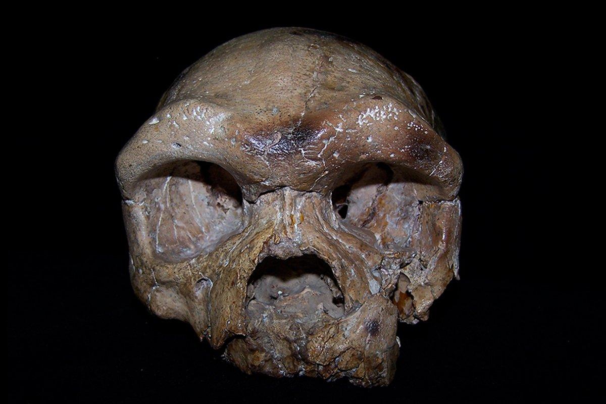 Una calavera de 260.000 años sugiere que la humanidad no nació en África