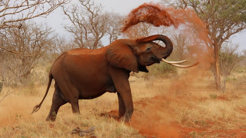 Trump pospone la decisión de permitir la importación de elefantes cazados como trofeos