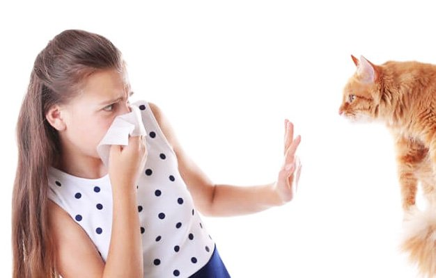 Cat Allergy: Causes, Symptoms, Treatment and Prevention https://t.co/IXVCdRtWBE https://t.co/DAMF1B20ij