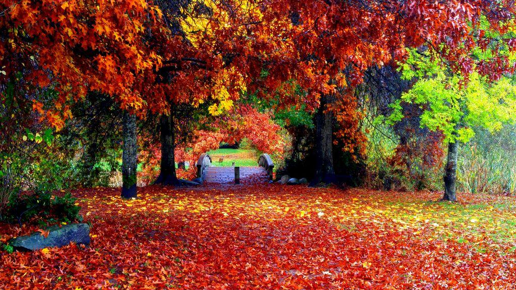 #Autumn https://t.co/O9NRXusgEp ???????? https://t.co/B3TRqoxFb5