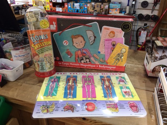 Three great toys to introduce your child to the miracle of anatomy. #HumanBody #EducationalToys https://t.co/N7RMQiB2LT