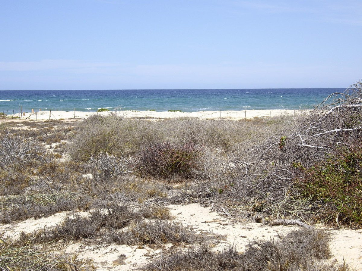 Playa Colorada Lot #14 East Cape, MLS# 17-1677 $49,900 USD More info: https://t.co/SeUExCJS6A  #cbriveras #realtors #realestate https://t.co/ZxTaMIuoM0