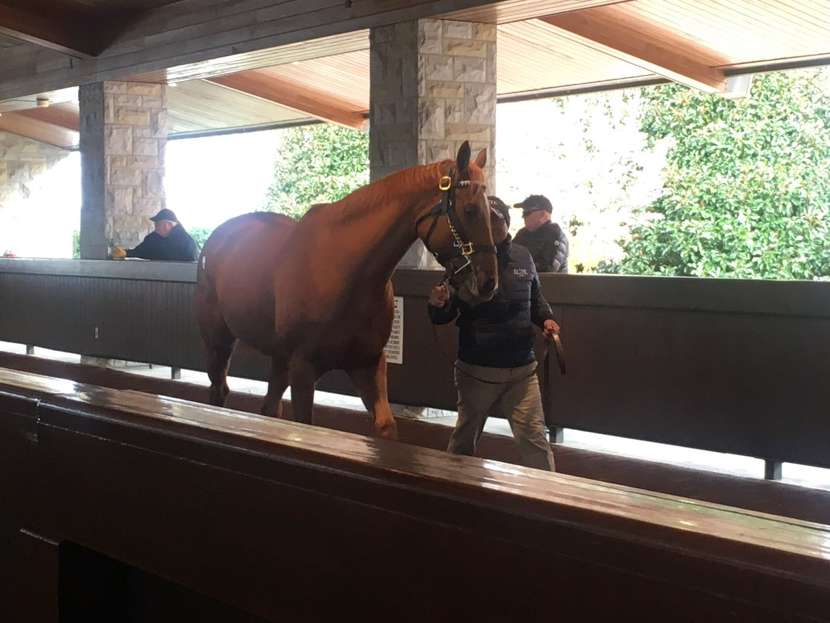 test Twitter Media - Hip #259 - G3W I'm A Looker in the back ring @keenelandsales family of G1W Dortmund and ultra fast with two 1 1/2 Thoro-Graph's #Dontmissher https://t.co/tCMIIaNcuz