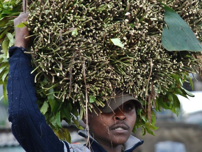 Meru MCAs oppose NACADA restrictions on miraa chewing time