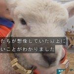 2017-11-19アタック25実況イメージ2