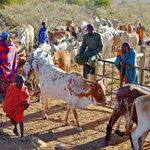 Laikipia County leaders want herders prosecuted