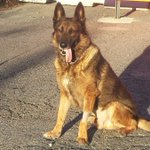 K-9 deployed after Boston Marathon bombing dies after illness