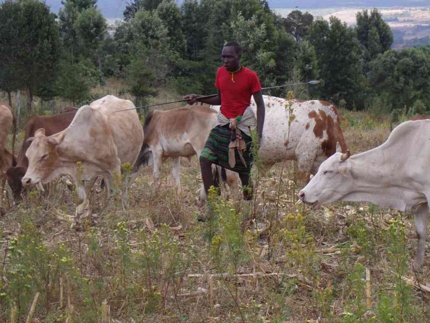Jubilee MPs clash over killing of cattle in Laikipia