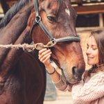 Horses can read human body language