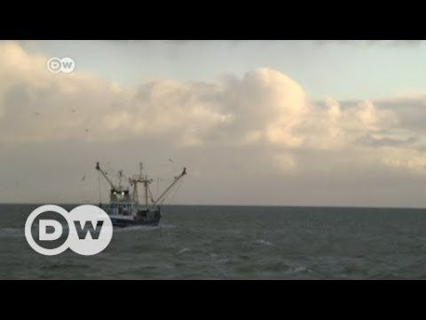 Brexit throws Europe's fishing industry into troubled waters | DW English